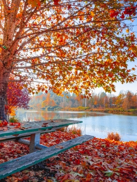 autumn-leaves-beautiful-daylight-1741696